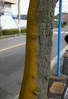 へ…変な木!?