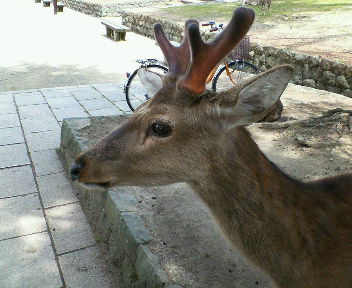 奈良の旅行②